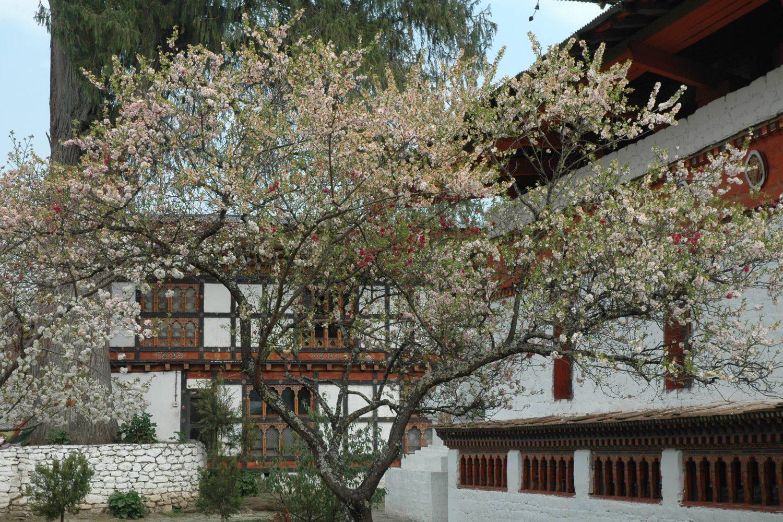 Tempel Kyichu Paro Bhutan Buddhismus Jowo