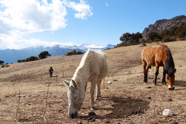 Bhutan Trekking Bumdra Himalaya Paro Wanderung
